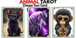 🦒Animal Tarot for November - Find out now