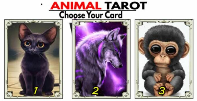 Animal tarot